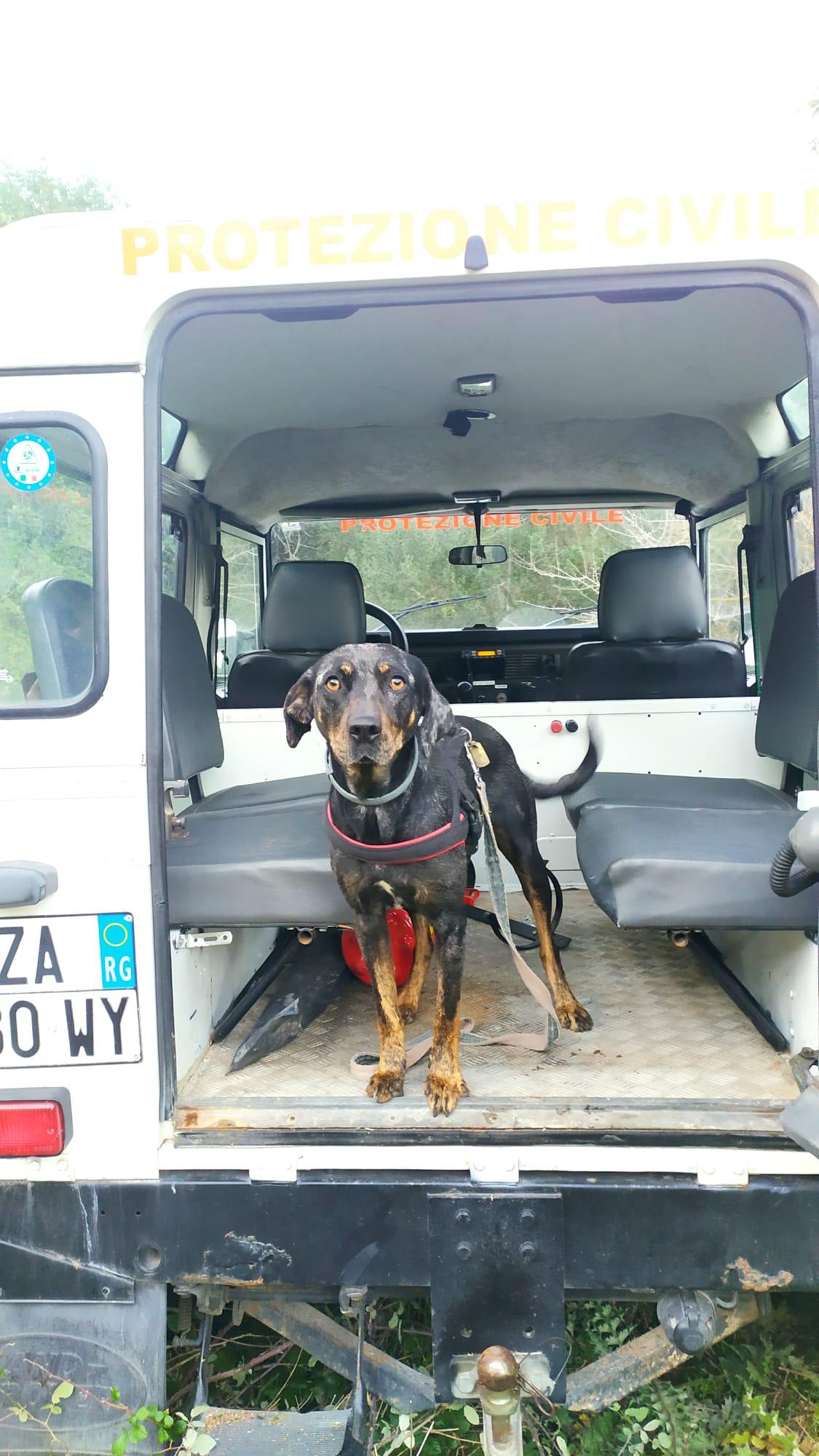 Grazie al fiuto di Bianca e Kira, due cani della Protezione Civile, ritrovato un anziano smarritosi a Cava D'Ispica